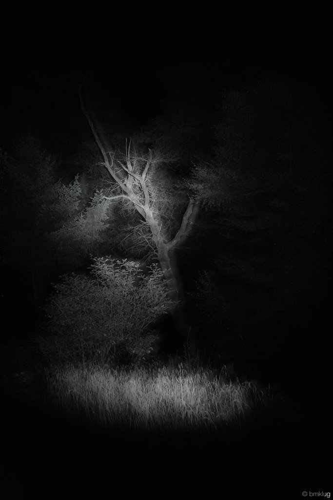 Darkness of Woods